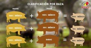 Clasificación-iberico